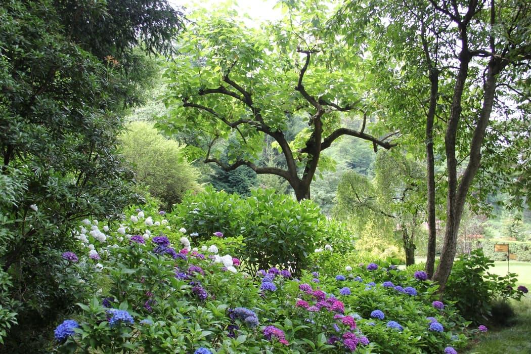 Imagen de un bosque urbano en un jardín particular