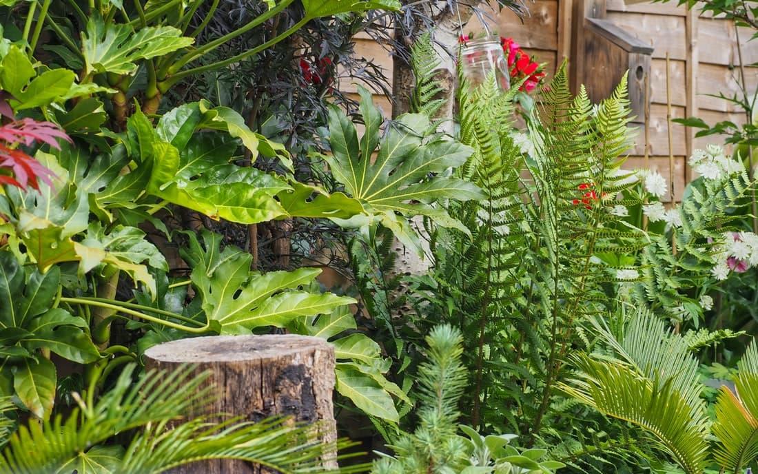 Imagen de un jardín plantado con el Método miyawaki
