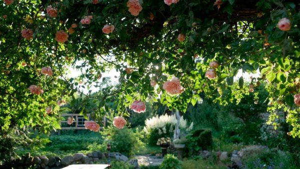Imagen de un bosque urbano plantado en un jardín con el método Miyawaki