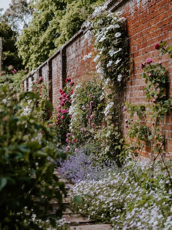 Imagen de una pared de barro cocido llena de plantas